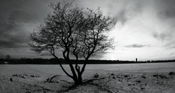 The Joshua Tree?
